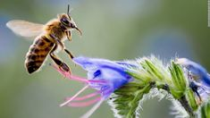 Beetles, butterflies and bees, oh my! Pollinators face extinction, study says @CNN
