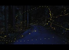 One thing I miss about the South is fireflies.  Long-Exposure Images By Tsuneaki Hiramatsu