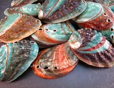 Russian Abalone Seashells