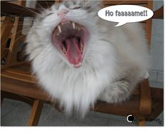 Fame...felina!!!!