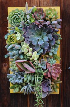 Hey, I found this really awesome Etsy listing at https://www.etsy.com/listing/183879146/12-x-7-custom-succulent-vertical-garden