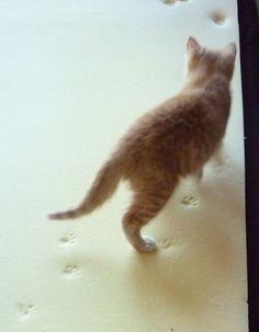 cat on Nature's Sleep memory foam