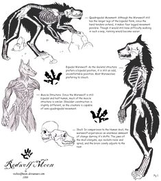 After finding this one werewolf board page, I was oddly inspired to draw up some anatomy on a lycan. Primarily bone anatomy. Edit: I have also created an Encyclopedia styled Lycan information page. Mythological Creatures, Fantasy Creatures, Mythical Creatures, Arte Teen Wolf, Werewolf Art, Werewolf Mythology, Werewolf Drawings, Vampires And Werewolves, Creature Design