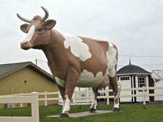 Wilkes Barre: Giant Cow on Wilkes-Barre Blvd (Route 309)