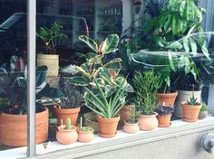The window of our pop-up at @mavencollectpdx is full of vibrant greenery and rich terra-cotta.