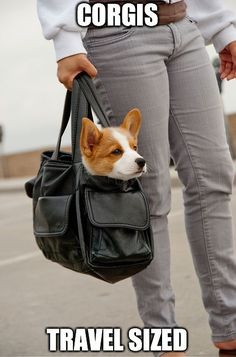There is plenty more corgi cuteness where that came from. Just click the corgi in the bag! #cute #corgi - bags sale online, bag collection, designer bags *sponsored https://www.pinterest.com/bags_bag/ https://www.pinterest.com/explore/bag/ https://www.pinterest.com/bags_bag/bags/ http://shop.mango.com/US/women/accessories/bags
