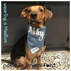 113ee3e3e749 Dog Boutique, Dog Bandana, Bandanas, Giveaway, Hair Bandanas, Bandana. Precious  Paw Prints Boutique · Personalized Dog Bandanas
