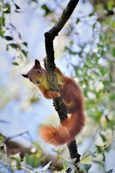 Cute Squirrel Images for Iphone Wallpapres Free Pictures, Free Images, Parks, Cute Squirrel, Squirrels, Mini 8, Racoon, Mundo Animal, Rodents