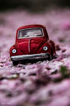 new old vintage cars vw beetles ideas vintage cars Miniature Photography, Cute Photography, Creative Photography, Cool Pictures For Wallpaper, Volkswagen, Miniature Cars, Mini Photo, Cute Cars, Car Wallpapers