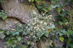 Flora rupícola en roca