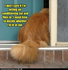 Humor cats ...For more lol cats and hilarious animal memes visit www.bestfunnyjokes4u.com/lol-funny-cat-pic/