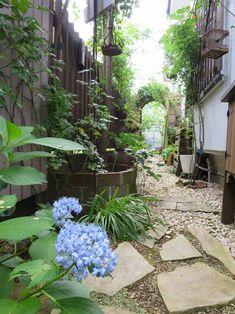 雑木とバラの庭を作っています。目標!通ると泣ける庭です!