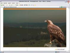 "diebündner ""OldSchool"" Website HTML, 2005 Bald Eagle, Old School, Bird, Animals, Website, Animales, Animaux, Birds, Animal"
