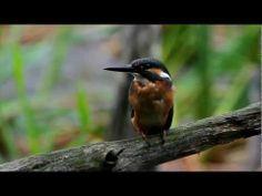 ▶ Ptaki Polski - YouTube