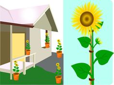 Enjoy the sunflower as a decorative element in your home or wherever else you 've placed the container 13.jpg