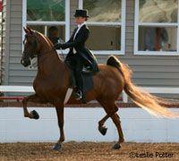 national saddlebred show horse champion - Google Search