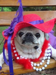 """Make sure you get a close up"". Red Hat Society - Homemade costumes for pets"