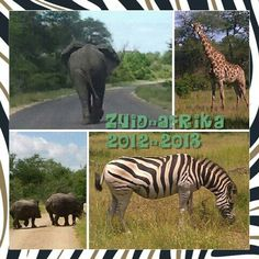 Super vakantie! Animals, Animales, Animaux, Animal, Animais
