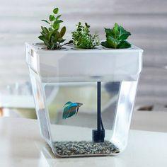 #new Aquafarm Self-cleaning Organic Plant Growing Aquaponics Fish Tank Акваферма Year-End Bargain Sale Pet Supplies Fish & Aquariums