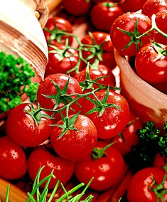 Meat Tomato 'Petula' F1 Hybrid. This type of tomato (Solanum lycopersicum) is very precocious. The fruits of these large tomato plant are 80-90 grams. Tomato 'Petula' is very suitable for outdoor cultivation and cultivation under glass and foil. The plant is resistant against tomato diseases.