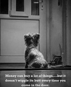 Dog Training 101 How To Train Your Dog - Funny Dog Quotes - Money can buy a lot of things but it cant buy unconditional love From your friends at phoenix dog in home dog see more about Animals And Pets, Funny Animals, Cute Animals, Yorkies, Pomeranians, Westies, Bichons, Yorkshire Terrier, Cute Puppies