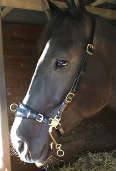 For Bitless riidng. Soft padded noseband in black and brown with Silver and Gold. Sizes Horse and Pony