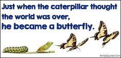Just when the caterpillar thought the world was over, he became a butterfly