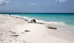 travelizard.com Aruba Beach Club, Water, Outdoor, Gripe Water, Outdoors, Outdoor Games, The Great Outdoors