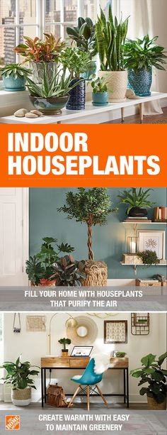 No matter what shade of green your thumb is, The Home Depot Garden Center has your back. Indoor houseplants purify the air and add personality your home decor. They are also easy to maintain, guaranteed. If your home garden and landscaping plants don't la Succulents Garden, Garden Plants, Planting Flowers, Jar Plants, Shade Plants, Vegetable Garden, Flower Gardening, Indoor Flowering Plants, Inside Plants