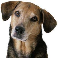 À quel point les chiens peuvent-ils apprendre dautres chiens?