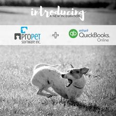 A match made in doggy heaven 🐶 We are excited to introduce our newest integration with QuickBooks Online! Take a test drive of ProPet to try it out! Quickbooks Online, Dog Daycare, Match Making, Driving Test, Software, Heaven, Train, Dogs, Animals