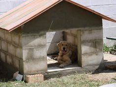 Hacer casa de perro con bloques de cemento Dog House Bed, Pet Hotel, Dog Pen, Niches, Dog Yard, Pet Furniture, Dog Crate, Pitbull, Dog Boarding
