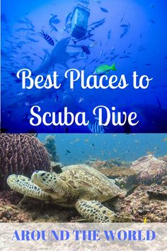 Looking for somewhere to plan your next diving vacation? Check out some of the best places to scuba dive around the world!