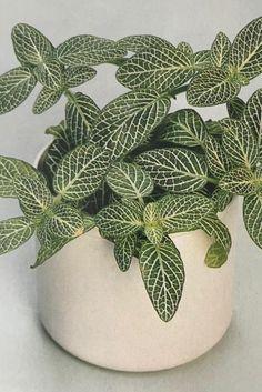 Bella, Planter Pots, Sweet Home, Room, Relative Humidity, Ornamental Plants, Indoor Plants, Snails, Degree Of A Polynomial
