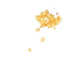 «Wild - The Yellow Flower Petals - Troye Sivan» de carouseli