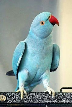 SOME KIND OF PARROT....BEAUTIFUL....
