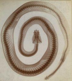 snake skin spiral, not.
