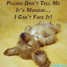 Oh No It Is Monday... #humor #lol #funny