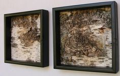 Birch Bark Art Birch Bark ModernMinimalist Urban by MadeAtTheLake, $50.00