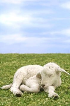 """veganbunnyhugger: """"""""Animals can communicate quite well. And they do. And generally speaking, they are ignored"""" - Alice Walker """""""