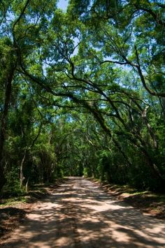 Edisto Island, SC...I go there in my dreams all the time.  This is our home away from home.