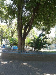 Arborização na Praça central de Magé, RJ