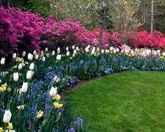 Beetgestaltung Ideen mit kontrastierenden Blumen und Stauden