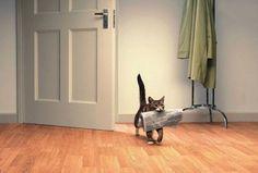 qualsiasi padrone di gatti vorrebbe che accadesse