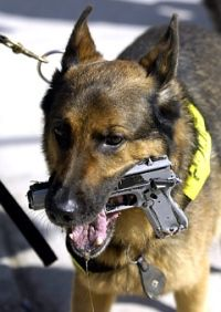 k 9 dogs in action - www.policemag.com Fetch odd objects, lets start w/ plastic gun, then metal object, then real gun. Don't wanna get the gun so dirty too early! ;)