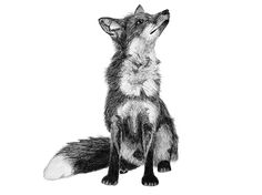 Mr. Fox // ceciliahedin.com