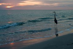 Captiva Island   Flickr - Photo Sharing!