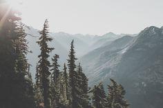 {woodlands + wanderlust}