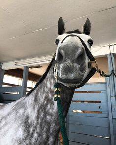 The most important role of equestrian clothing is for security Although horses can be trained they can be unforeseeable when provoked. Riders are susceptible while riding and handling horses, espec… Funny Horses, Cute Horses, Pretty Horses, Horse Love, Horse Girl, Beautiful Horses, Animals Beautiful, Beautiful Cats, Equestrian Outfits