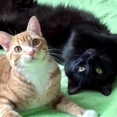 20 Gatos fofos que ficaram famosos na internet